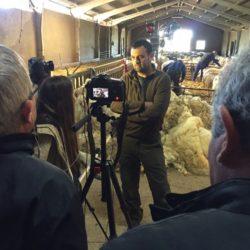 Entrevista a un ganadero afectado por ataques de lobos en San Miguel de la Ribera (Zamora)